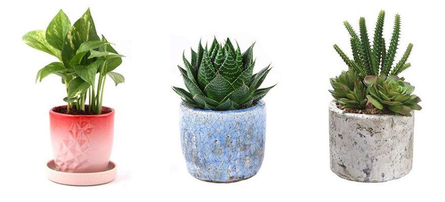 cactus-tropical-bedroom.jpg#asset:5446