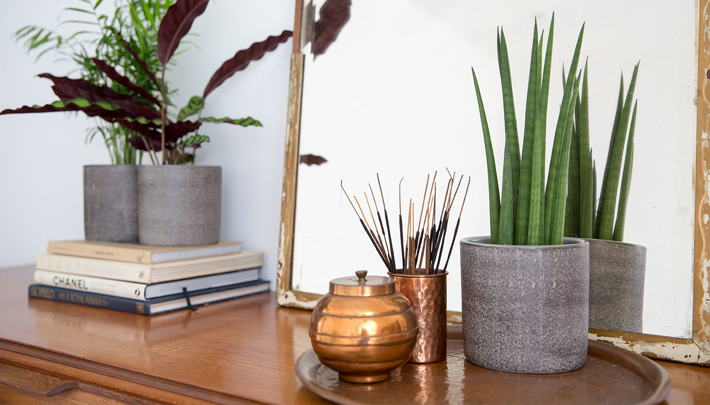 The Best House Plants For Your Bedroom Secret Linen Store