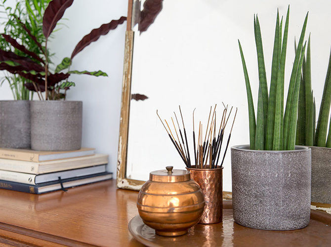 The Best House Plants for your Bedroom