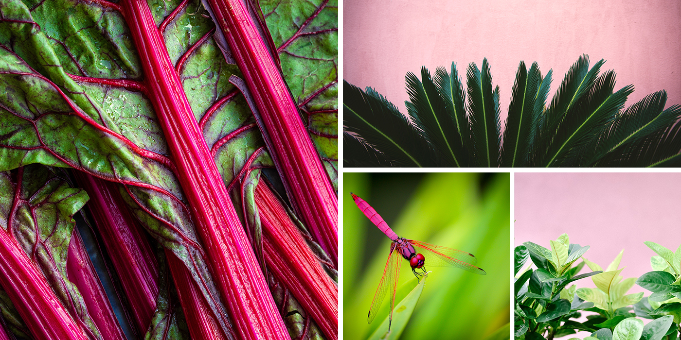 Collage of Pink and Green Images