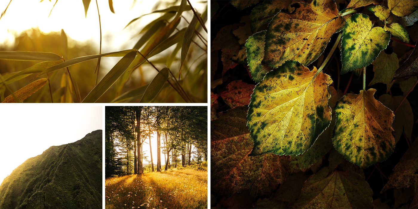 Collage of Green and Gold Images